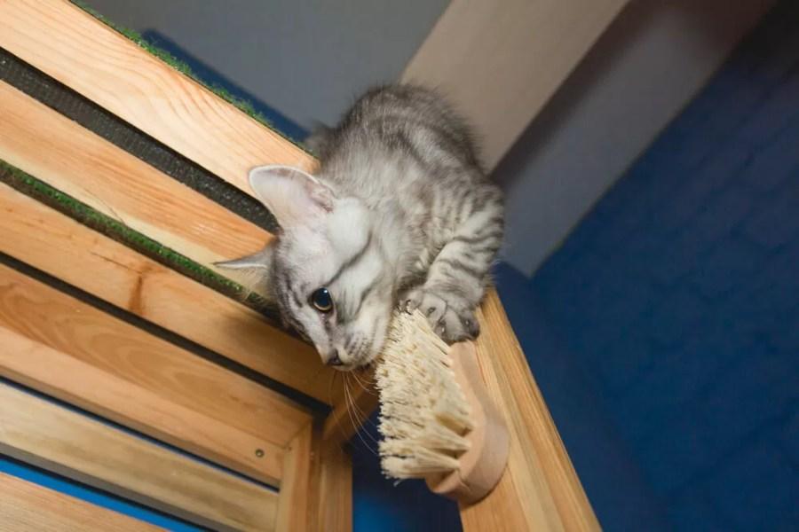 kenapa kucing aktif di malam hari