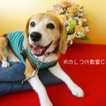 5月4日(祝)は犬のしつけ教室Cocoro ペット健康祈願です。