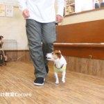 犬のしつけ教室のトレーニングって?