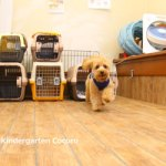 愛犬を安心して預けることができる場所ありますか?