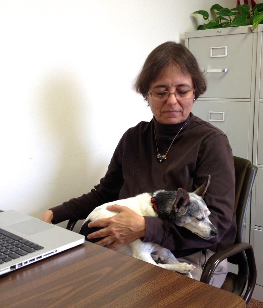 Elderly rat terrier with dementia sleeping in woman's lap