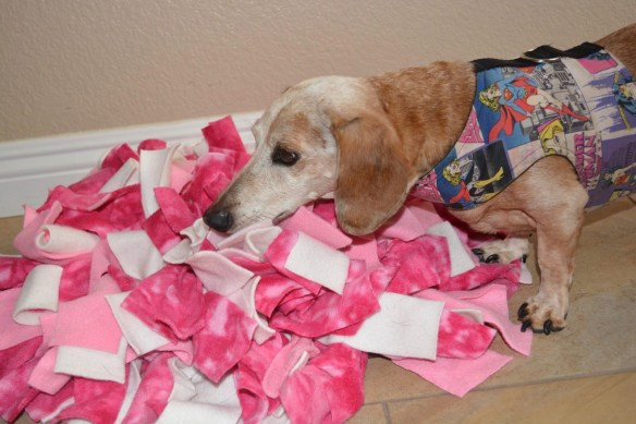 senior dachshund noses around in a pink and white mat for food