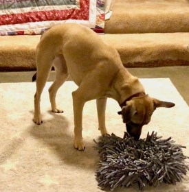 tan dog eating her dinner out of a snuffle mat