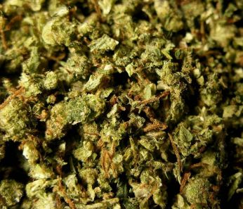 Dried leaves and buds from the cannabis plant