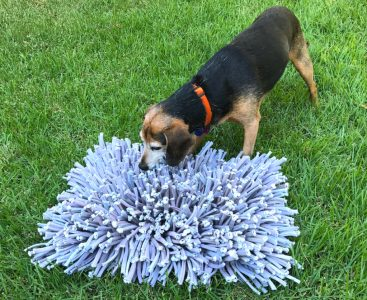 black dog sniffing a snuffle mat