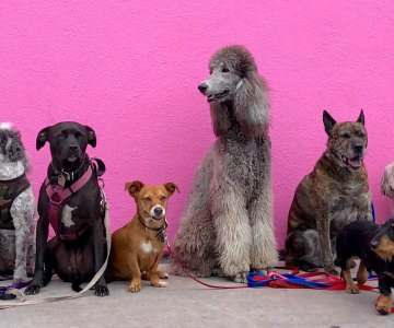 Pink Wall Full of Dogs