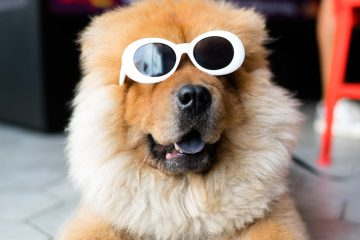 "Totally cool dog wearing stylish shades thinking, ""you wish you were this awesome."""