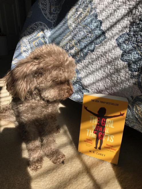 benji and the book 2