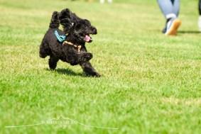DOG FES IWAKI 2017_8478