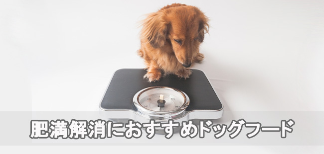 肥満解消におすすめなドッグフードランキング