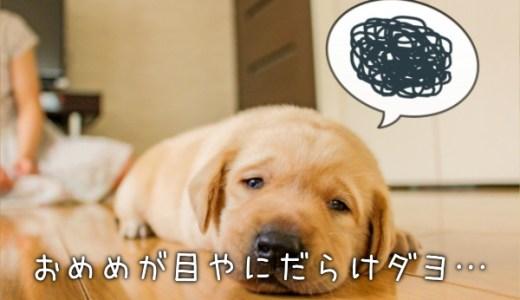 ほうっておくとヤバイ!【犬の目ヤニ】は注意しなければなりません