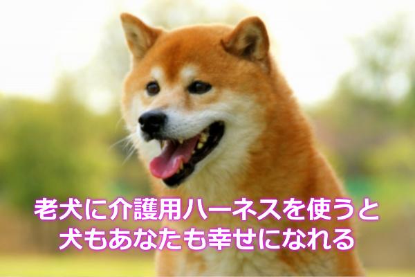 シニア犬に介護用ハーネスを使うと幸せになれる