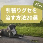 犬の引っ張り癖を治す方法20選