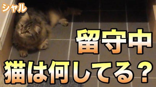飼い主が出かけたときの猫ちゃんの行動が可愛すぎる動画