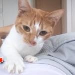 猫ちゃんが飼い主さんに構ってほしくて甘える姿がすごく可愛い動画