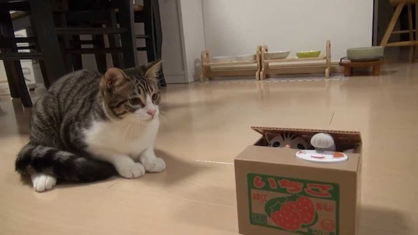 箱から出ないの?猫のおもちゃを優しくつんつんする様子が可愛すぎる動画