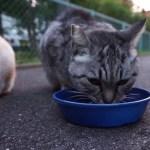 名古屋のある地域の人々が暖かく見守っている地域猫ちゃん達の朝食