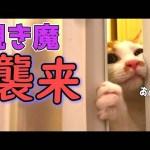 お風呂のぞきの猫ちゃん、ご主人様はここ〜?