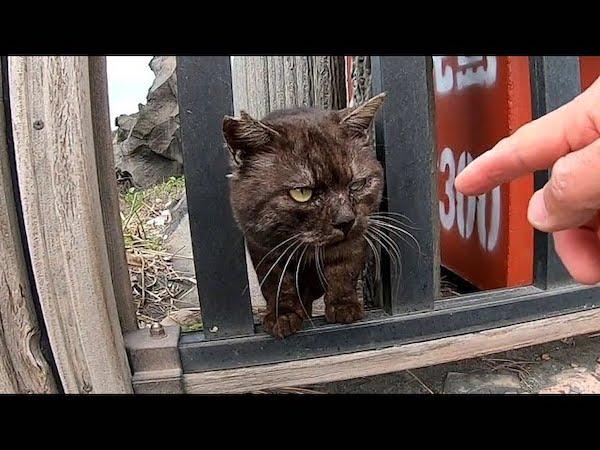 強面の野良ネコちゃんがめっちゃ人懐っこかった動画