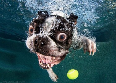 Blog12 Dogs Underwater 02