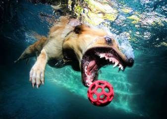 Blog12 Dogs Underwater 06
