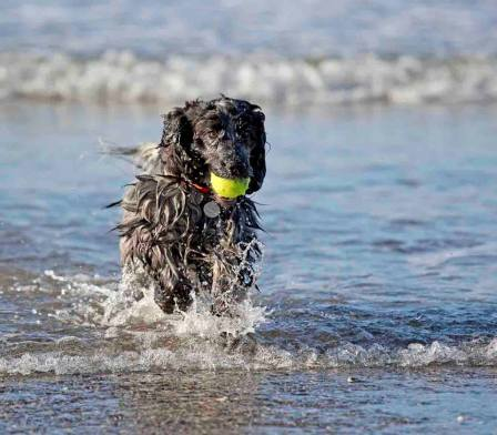 Blog07 Dogs Enjoying the Beach 01