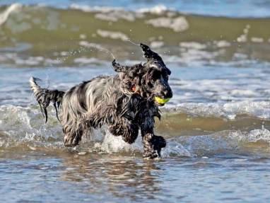 Blog07 Dogs Enjoying the Beach 07