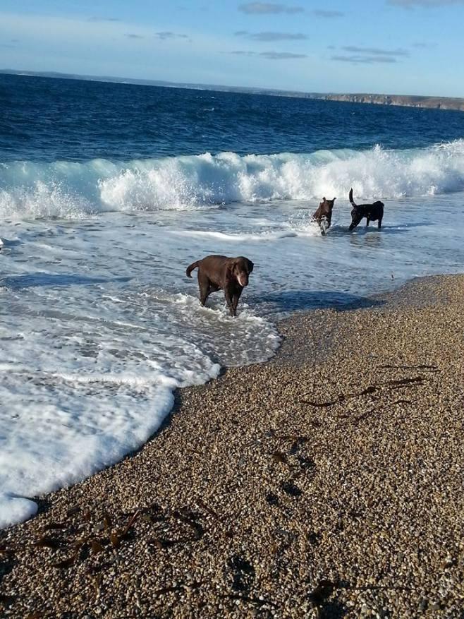 Blog07 Dogs Enjoying the Beach 13