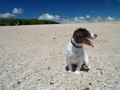 Blog07 Dogs Enjoying the Beach 15