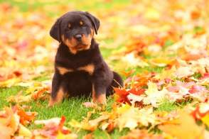 Blog041 Dogs Love Autumn 03