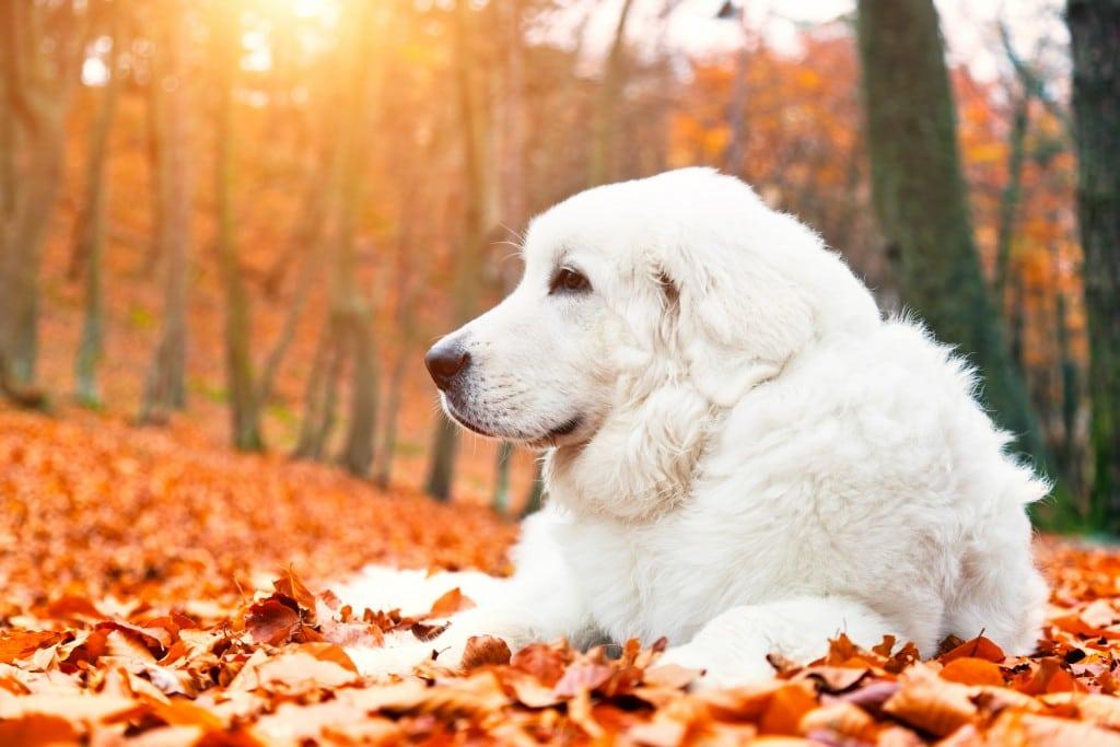 Blog041 Dogs Love Autumn 04