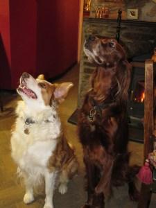 dogs_halzephron2