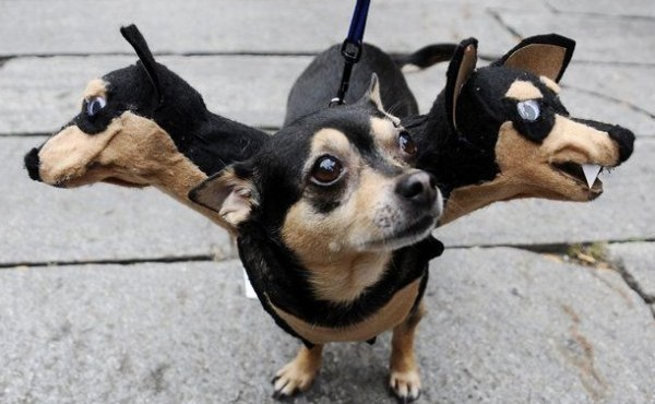 See more Halloween costumes at http://rollingout.com/2014/10/27/cute-dog-halloween-costumes/#1