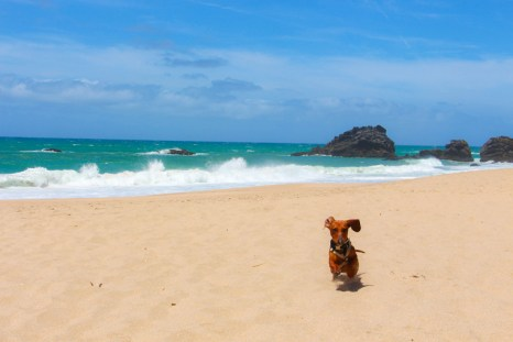 Praia da Adraga.