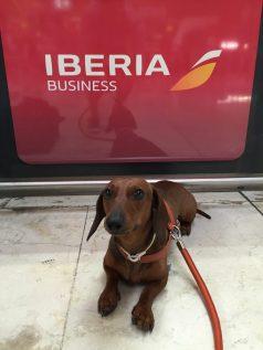 Iberia Business