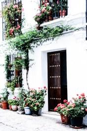 Las casas bonitas de Grazalema, las que tienen flores.