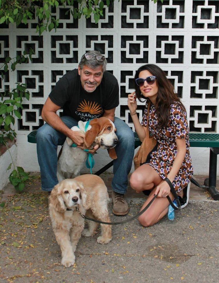 La nueva familia Clooney días atrás en San Gabriel Valley Humane Society.
