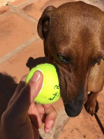 Club de Tenis Marbella.