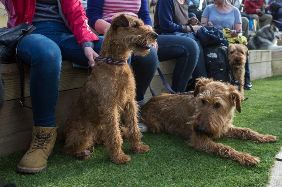 """Asistentes al concierto """"Music for Dogs"""" de Laurie Anderson en el Brighton Festival."""