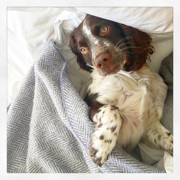Austin en la cama de sus padres.