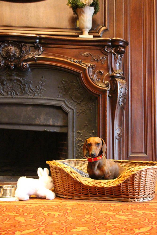 Eros con su nuevo amigo, el conejo blanco, regalo del Four Seasons.