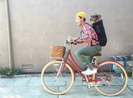 Teckel preparado para ir a toda velocidad en la bicicleta.