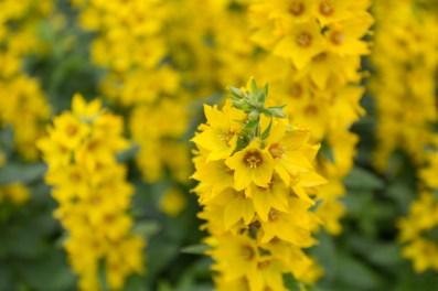 Flores por doquier en el parque Vigeland.