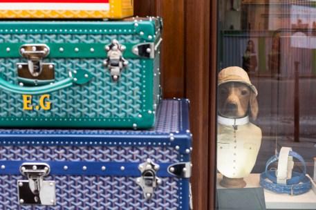 Una torre de maletas de colores y un perro muy elegante, con collares a su lado, visten el escaparate de la lujosa firma GOYARD.