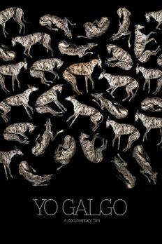 Yo Galgo