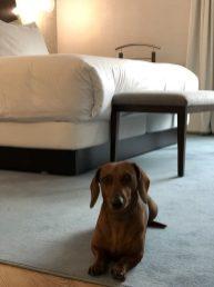 Hotel pet friendly en Madrid