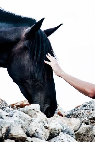 El binomio perfecto, jinete y caballo.