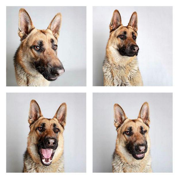 Foto: Guinnevere Shuster para The Humane Society of Utah.