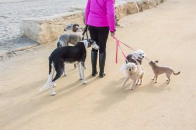 Se ven muchos perros paseando por la promenade.