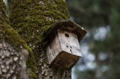 Residencia para una familia de pájaros.